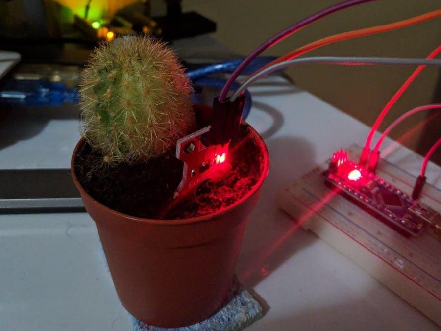 Sprechender Kaktus